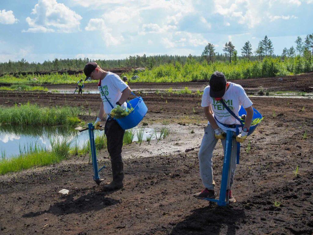 Virtain 4H-nuoret istuttavat EWQ-metsään puuntaimia Taimiteko-hankkeessa.